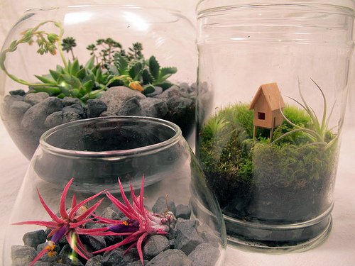 other-terrariums
