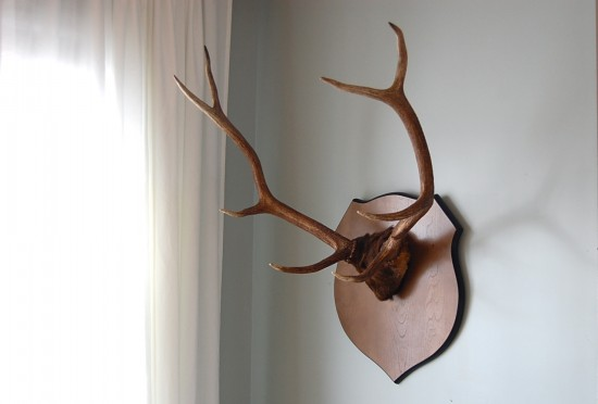 Spectacular It just so happened that that very same day I found something else I had long wanted Some mounted antlers Another thing I couldn ut explain