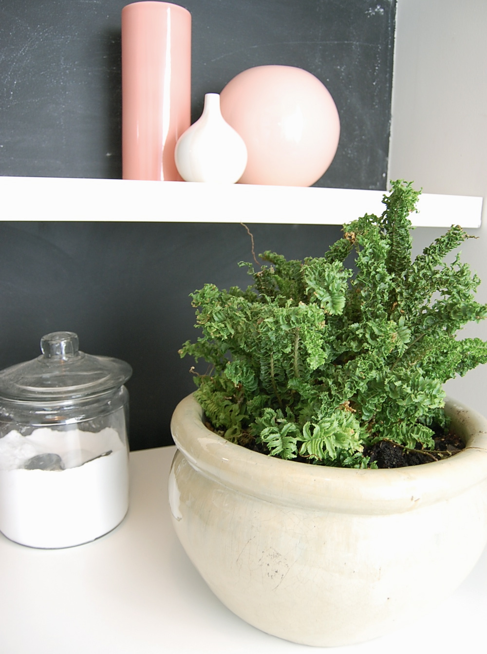 Planting Around Your House : Plants around the house easy houseplants
