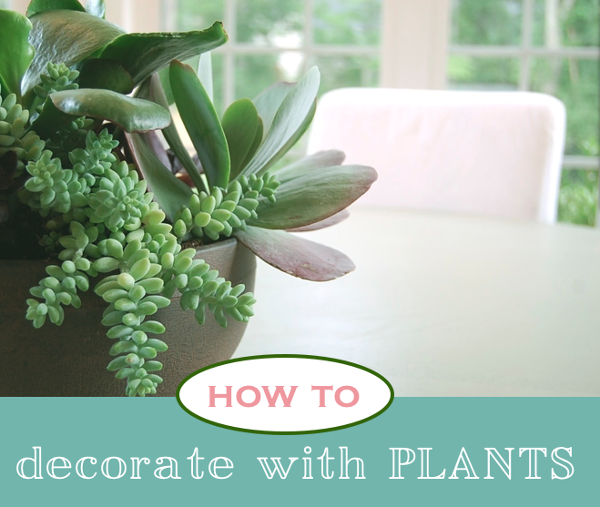 Decorating Dilemma House Plants: How To Decorate Your House With Plants 2017