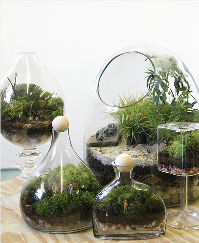 Using Plants In Your Home Part 4 Terrariums