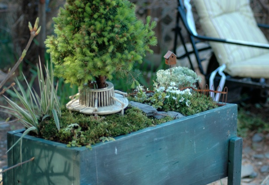Using Plants In Your Home Part 5 :: Fairy Gardens, They Arenu0027t Just For  Little Old Ladies