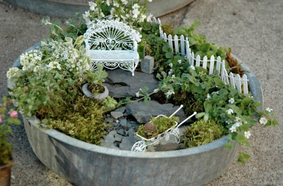 Using plants in your home part 5 fairy gardens they Fairy garden plants