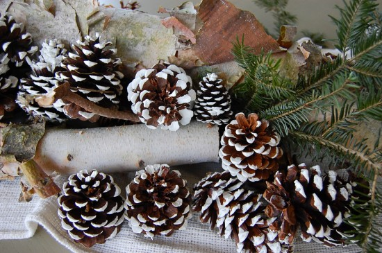 birch and pinecones