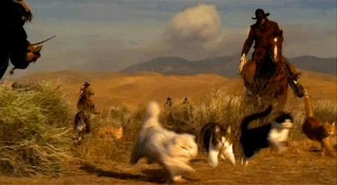cat-herding