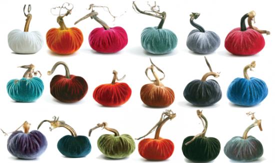 plush pumpkin colors np