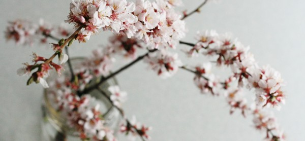 flowering-branch