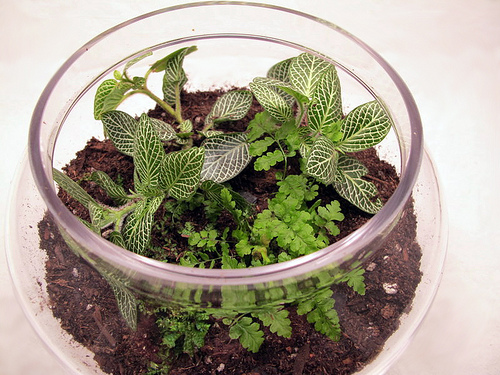 terrarium-planted