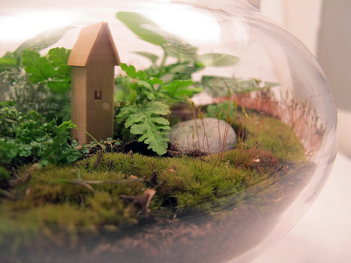 terrarium close-up