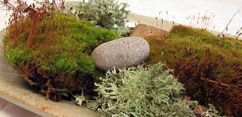 terrarium-moss