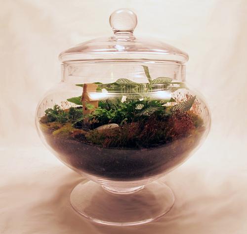 terrarium-lid