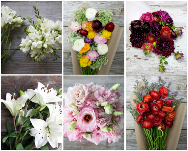 beauties flowers